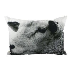Poduszka Sepia Sheep White 50x35 cm
