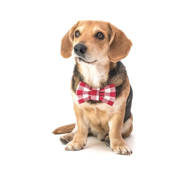 Mucha dla psa Funky Dog Bow Ties, roz. M, w czerwono-białą kratkę