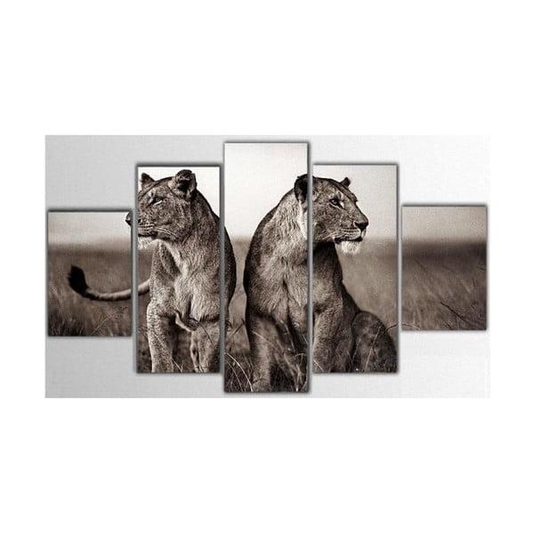 Pięcioczęściowy obraz Lions, 85x55 cm