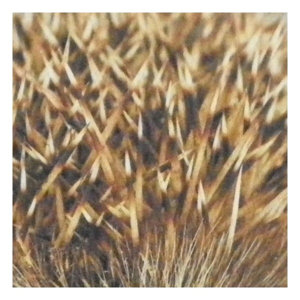 Dywanik Hedgehog 75x50 cm