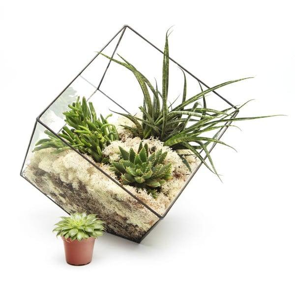 Terrarium z roślinami Super Aztec Cube
