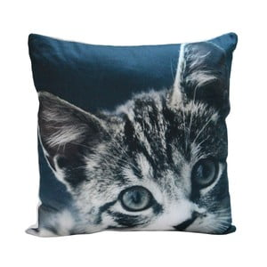 Poduszka Blue Kitty, 45x45 cm