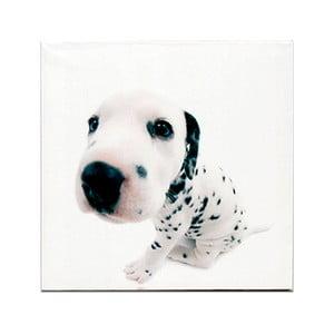 Drewniana tabliczka White Puppie, 30x30 cm