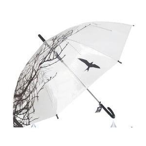 Parasol Du Parapluie Nature