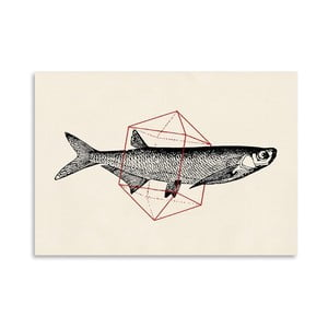 Plakat Fish In Geometrics 2, 30x42 cm