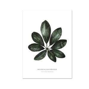 Plakat Leo La Douce Schefflera Arboricola, 21x29,7cm