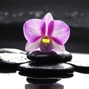 Obraz na szkle Orchidea Zen I, 50x50 cm