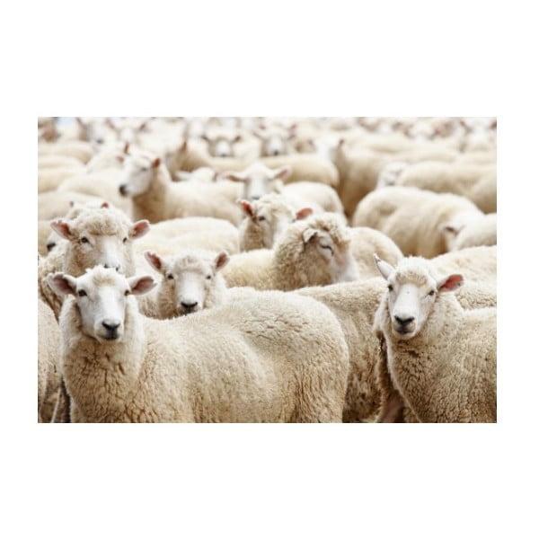 Dywanik Sheep 75x50 cm