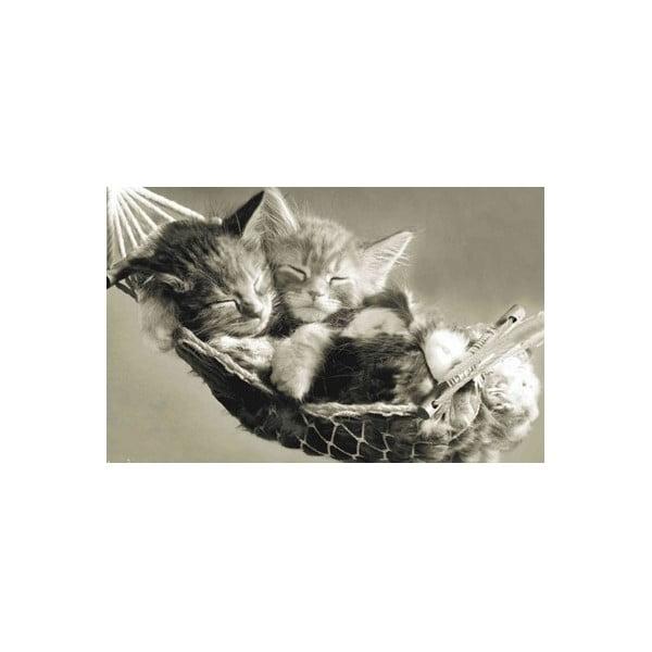 Fotoobraz Meow, 51x81 cm