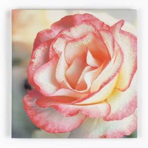 Obraz Graham & Brown Pink Petal, 50x50cm