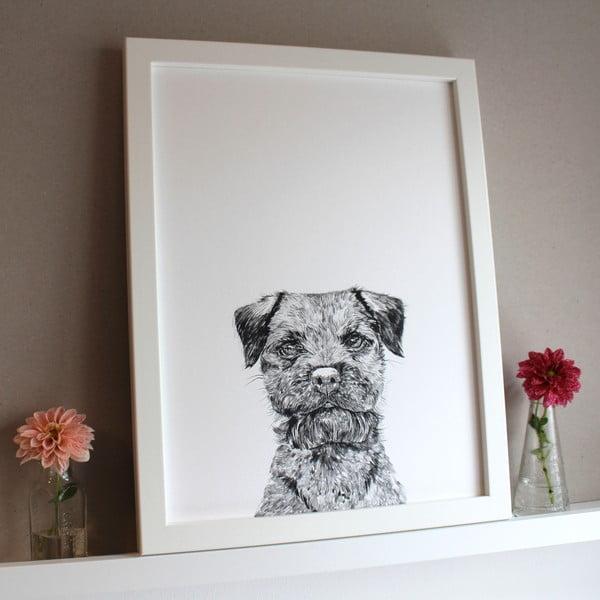 Plakat Baxter The Border Terrier, 30x40 cm