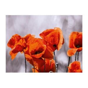 Obraz Eurographics Poppies