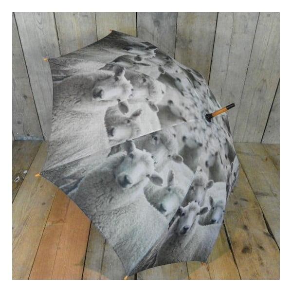 Parasol Sheep