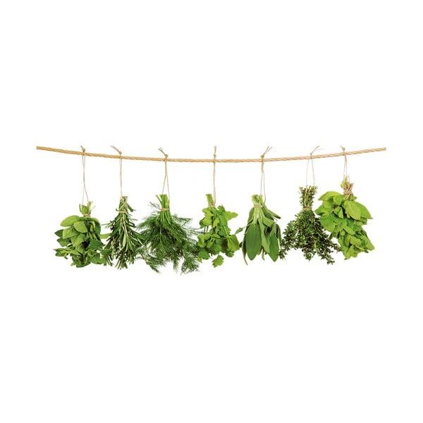Szklany obraz Hanging Herbs, 30x80 cm
