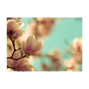 Obraz Magnolia, 45x70 cm