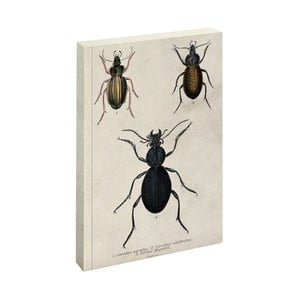 Notes Jay Biologica Beetle