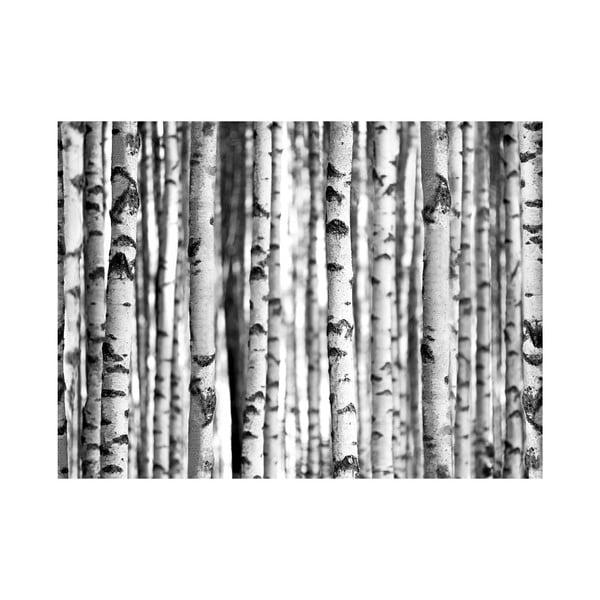 Wielkoformatowa tapeta W lesie, 315x232 cm
