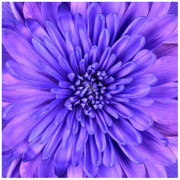 Obraz na szkle Błękit, 50x50 cm