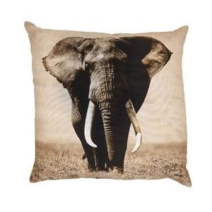 Poduszka Elefante, 50x50 cm