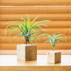Zestaw drewnianych doniczek Air pant Duo