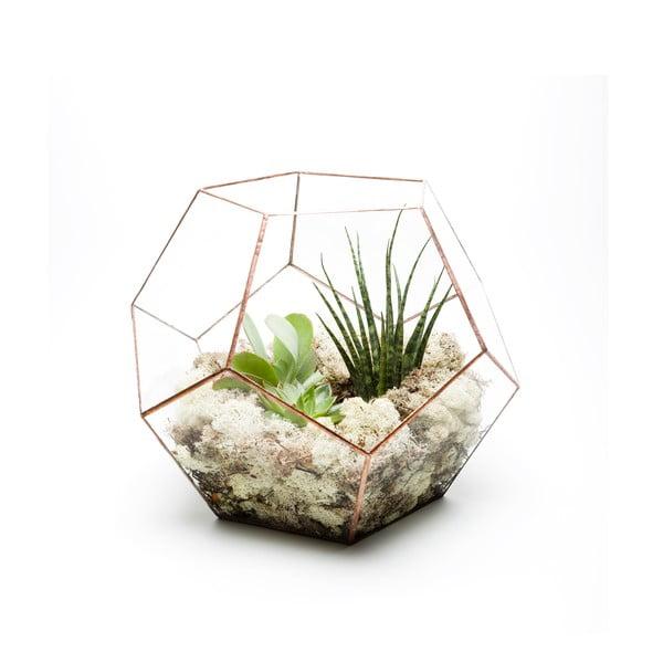 Terrarium z roślinami Supersize Penta, w jasnej ramce