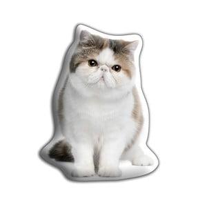 Poduszeczka Adorable Cushions Kot egzotyczny krótkowłosy