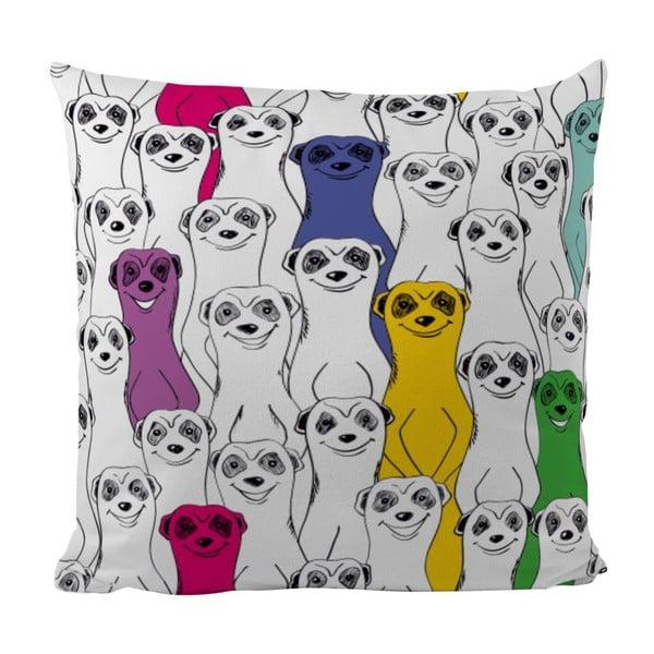 Poduszka Group Of Meerkats, 50x50 cm
