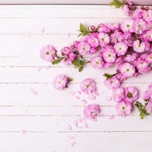 Obraz DecoMalta Sakura, 55x55 cm
