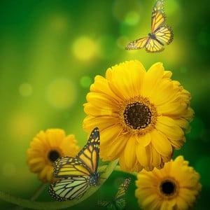 Obraz Dzień kwiatów, 60x60 cm