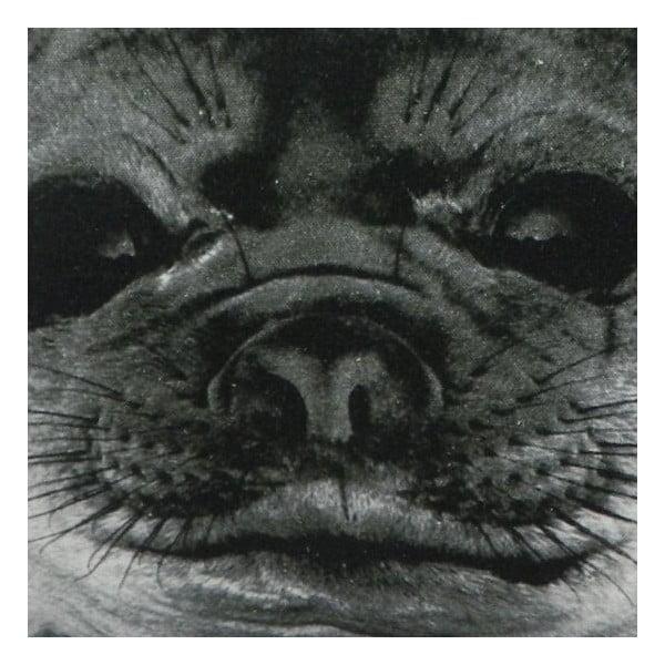 Poduszka Sepia Seal 50x50 cm