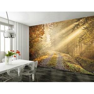 Tapeta Forest Murals, 315x232 cm