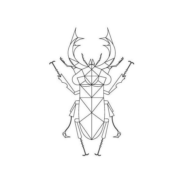 Plakat Stag Beetle, 50x70 cm