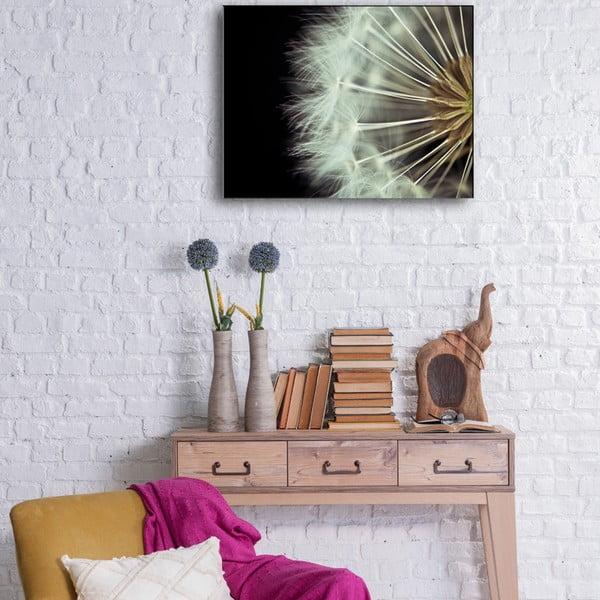 Obraz Dandelion, 50x65 cm