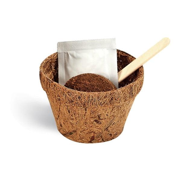 Zestaw do uprawy roślin z ziarnami kwiatów o zapachu czekolady Gift Republic Chocolate Lover